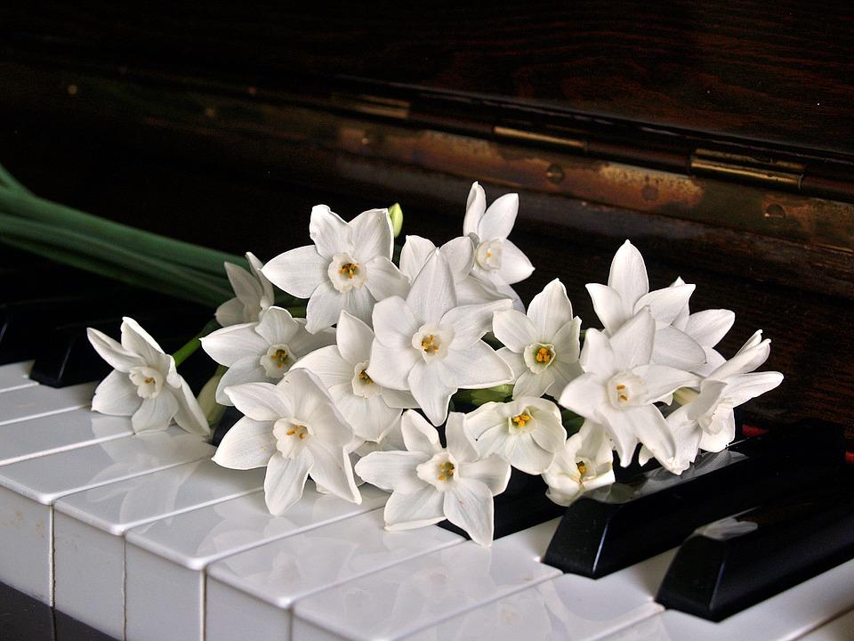 lyly-piano
